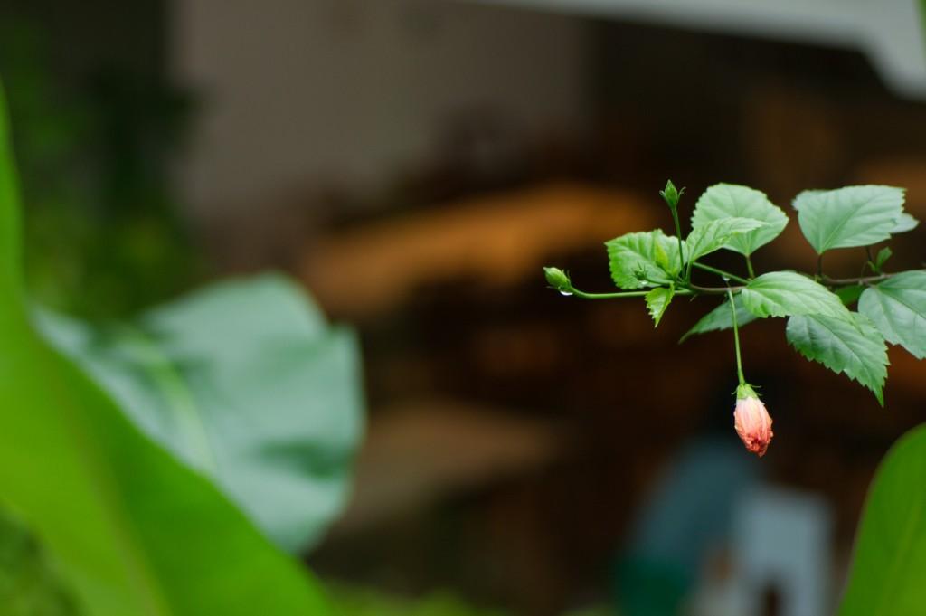 世界の窓の前の花